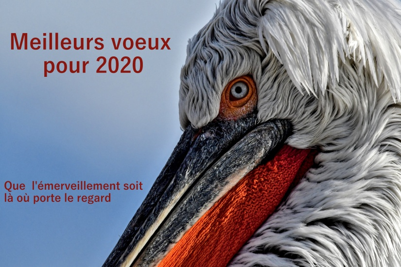 voeux20